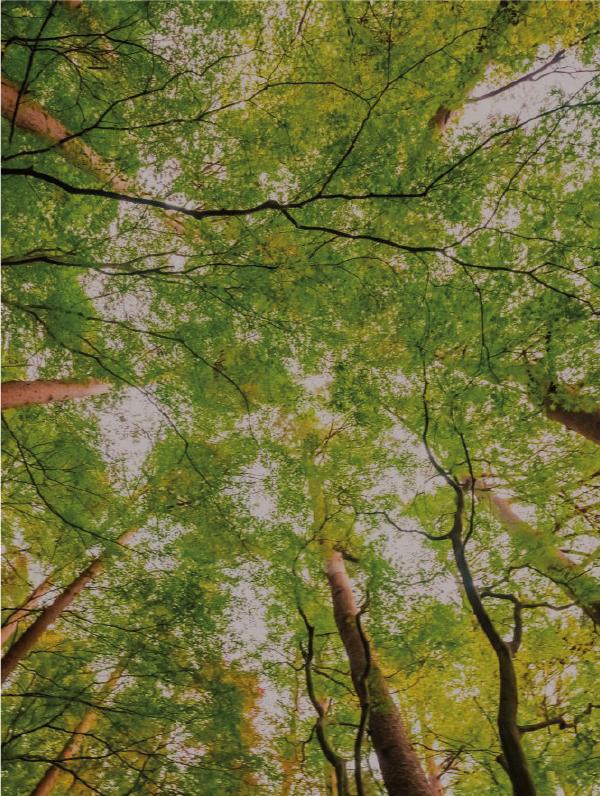 alberi_progetto_fili_lombardia
